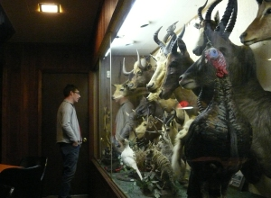 a taxidermy lover's dream