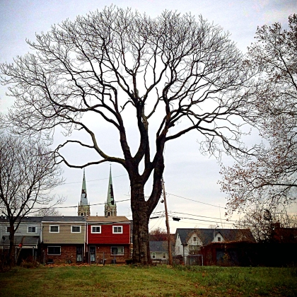 East Liberty: A tree in an empty lot across from Home Depot.